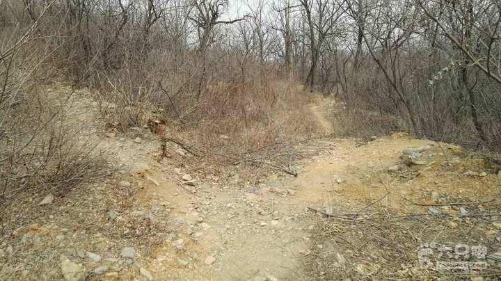 山路前行不远向西,即走上一条小山脊。